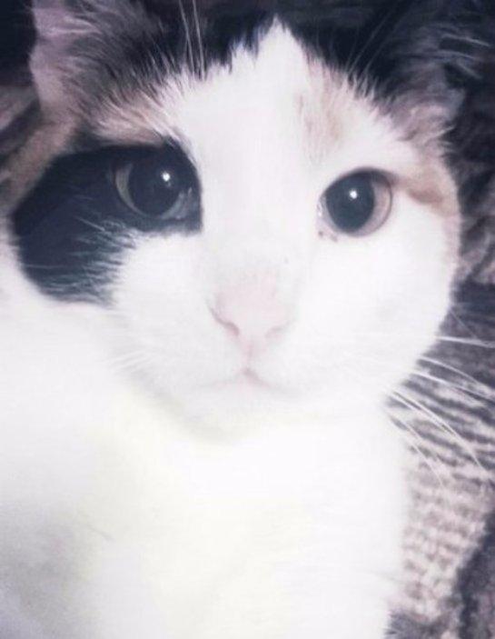 История про трехцветную кошку Мусю