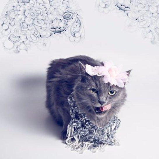 История про бездомную кошку, которая стала гламурной кото-леди