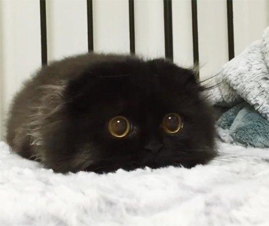 Глазастый кот покорил интернет