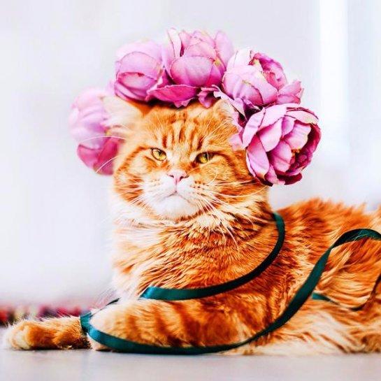 Коту по кличке Котлета сделали профессиональную фотосессию
