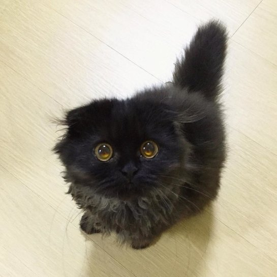 Кот с гипнотическими глазами покорил интернет