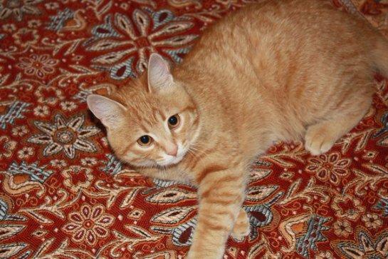 История про кота с большими ушами