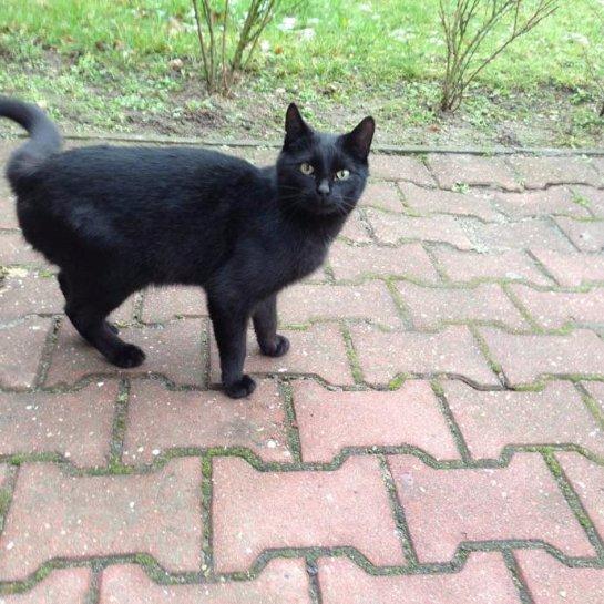 В польской больнице работает кот
