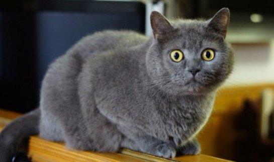 В Рязани собака спасла кошку, которую заживо закопали