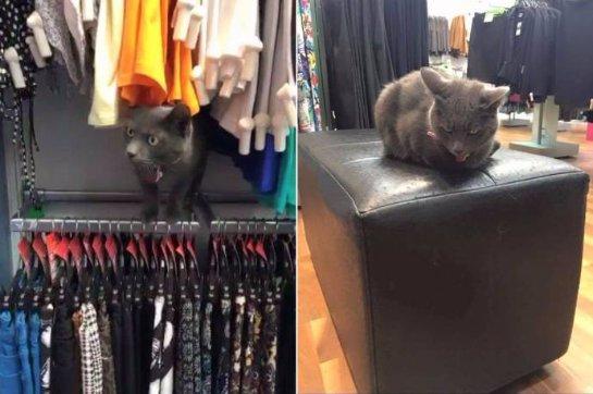 Кошка, которая любит шоппинг