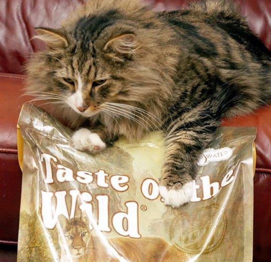 Пропавший кот год кормился в гипермаркете