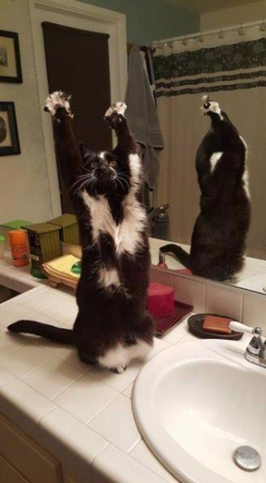 Кошка с поднятыми лапками приглянулась интернет-пользователям