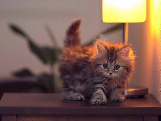 Котенку с редкой аномалией сделали удачную операцию