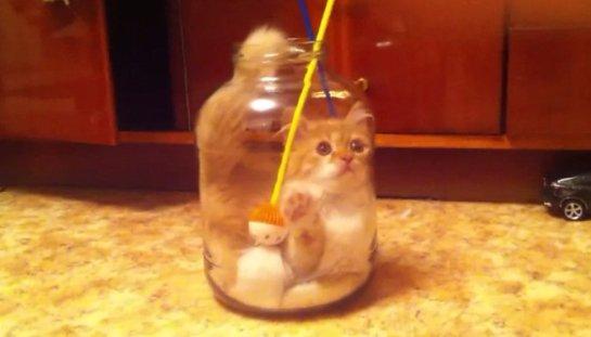 Котенок Туся залезла в банку