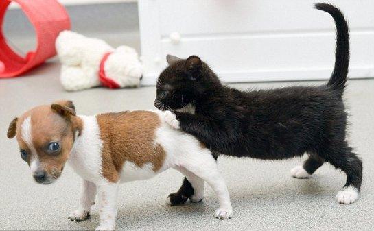 Котенок и щенок думают, что они сестры