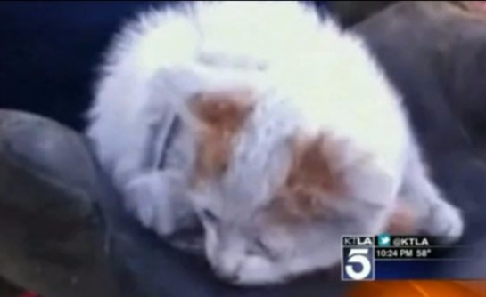 В Лос-Анджелесе спасли котенка