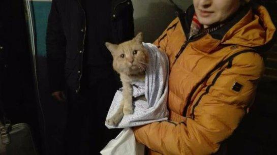 В Омске 12 часов кота вытаскивали из шахты многоэтажки
