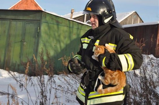 На Камчатке спасли кота, который больше суток просидел на столбе