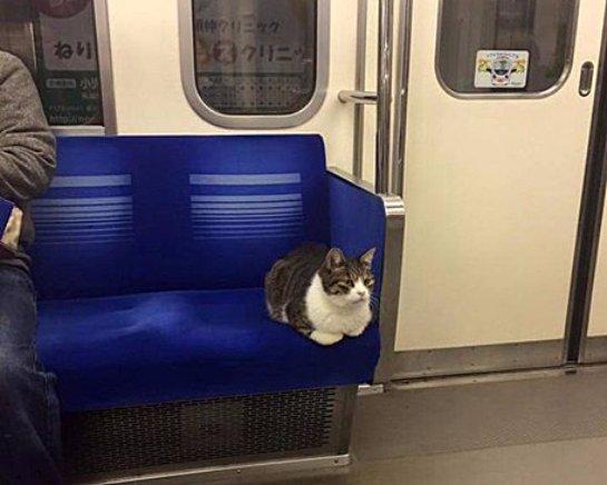 Кошка, которая ездит в метро