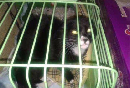 Приморский моряк спас котенка