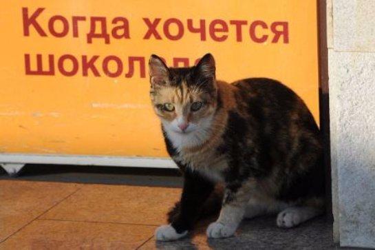 В курганском магазине коты невероятным образом попали в рыбный отдел