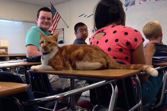 Кота сделали студентом