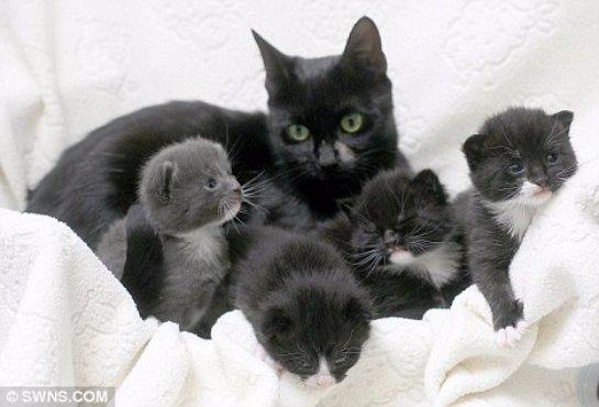 Кошка привела людей к котятам