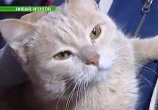Компания из Нового Уренгоя наняла на работу кота
