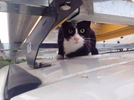 Кот прокатился на крыше фургона со скоростью более 100 км/ч