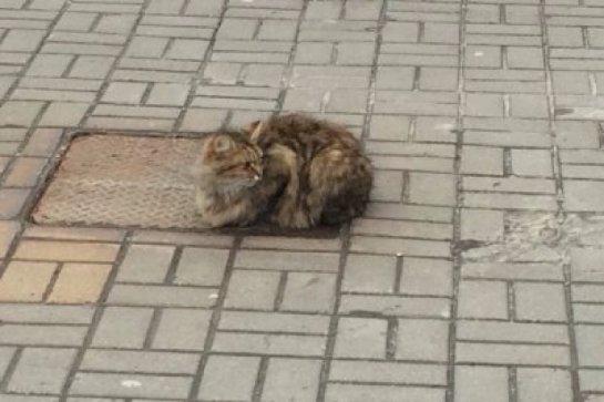 Кот преданно ждет хозяев, которые его бросили