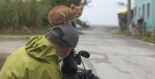 Котенок подружился с фотографом