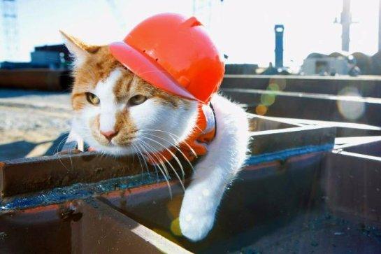 Пять котов работают в России