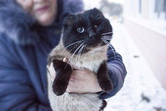 Хозяйка нашла кота, которого не видела несколько лет