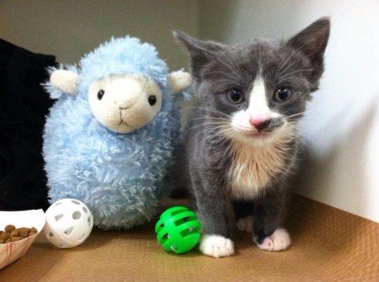 Девочка из Бостона спасла котенка