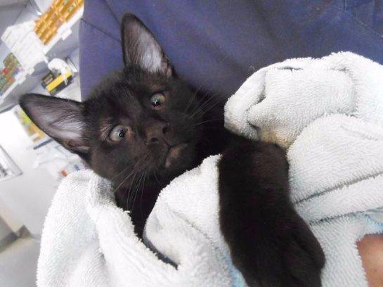 Косоглазый кот стал талисманом ветеринарной клиники в Австралии