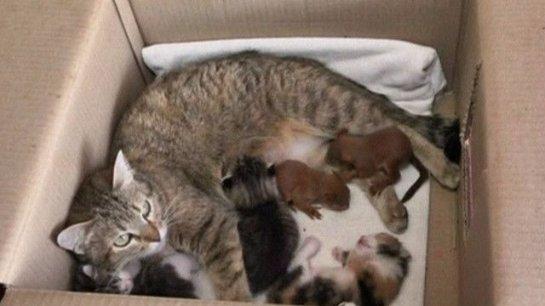 Кошка усыновила бельчат