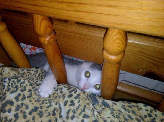 Котенок-непоседа, которого выходил небезразличный парень