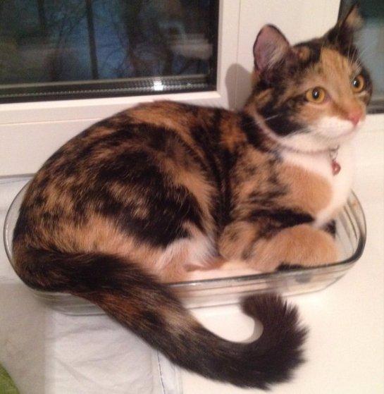 Новая жизнь кошки Туси