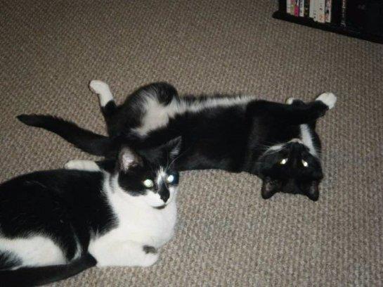 Коты, которые не могут друг без друга