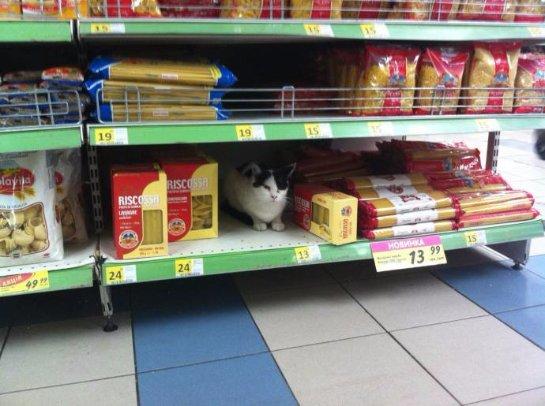 В киевском супермаркете живет кот