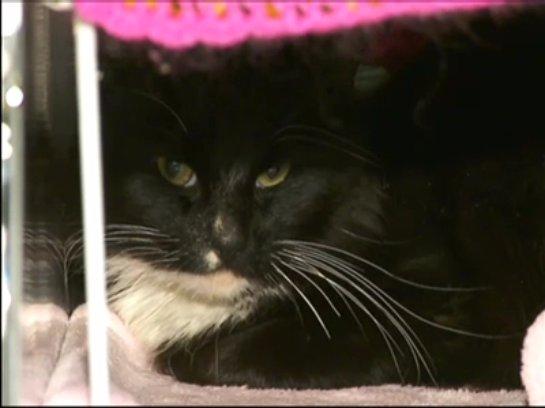 Кота спасли из ловушки между дорогами