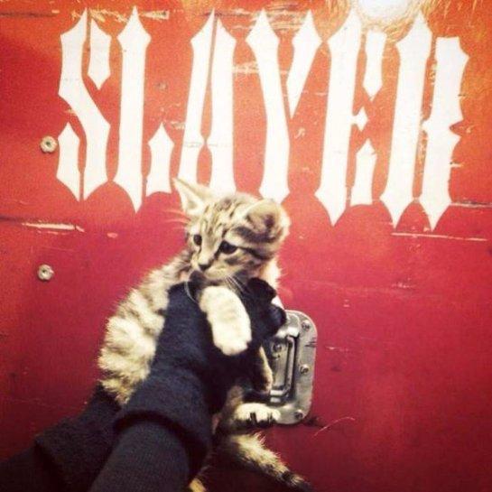 Музыканты из группы Slayer спасли бездомного котенка