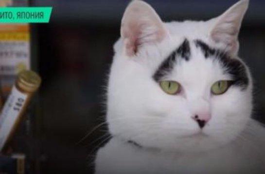 Кошку с черными бровями взяли на работу в табачную лавку
