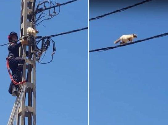 В Алжире спасли кота-экстремала