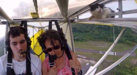 Кот, который прославился благодаря тому, что случайно оказался на борту самолета