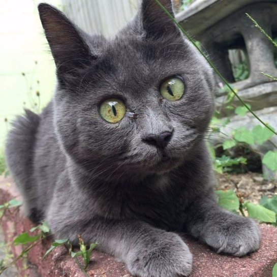 Вечно удивленный котик живет вопреки прогнозам медиков