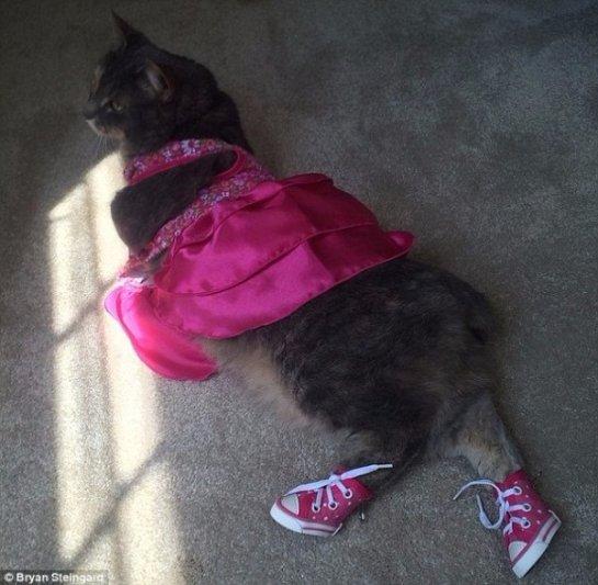 Американец пришел на выпускной бал с кошкой