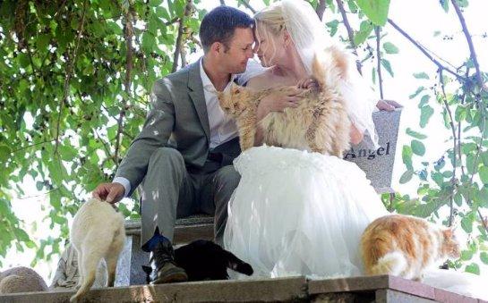 Канадская пара устроила свадьбу в кошачьем приюте