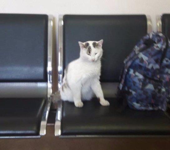 Девушка пошла встречать парня, а вернулась с котом