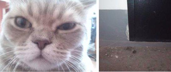 Из-за кота вызвали правоохранительные органы