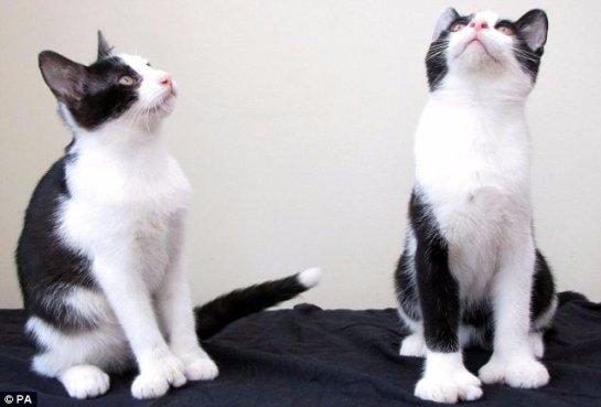 Два необычных кота
