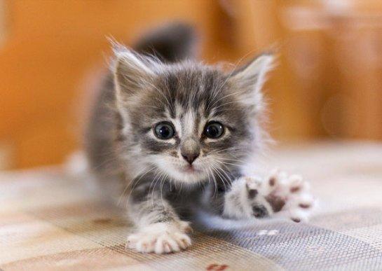 В Туле девушка спасла котенка