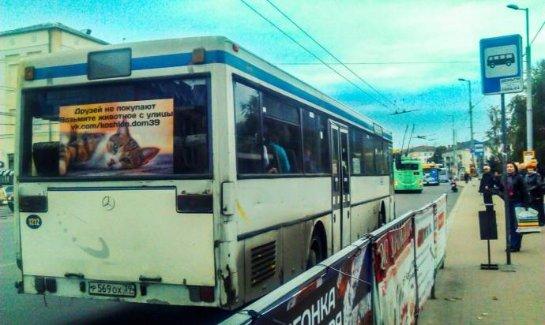 Калининградский автобус ищет хозяев бездомным кошкам