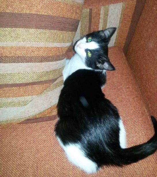 История Тишки, который хотел быть уличным котом