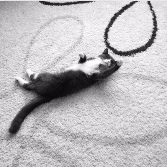 Котик, чья жизнь изменилась благодаря 12-летней девочке